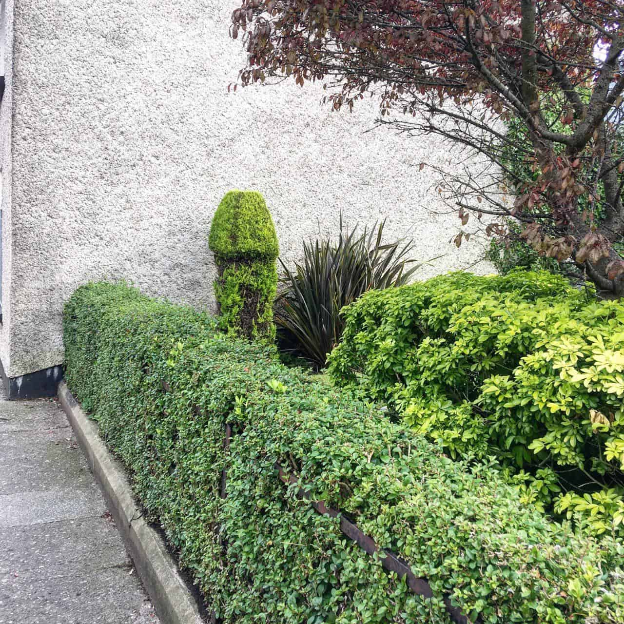 Picture of rudely shaped garden bush